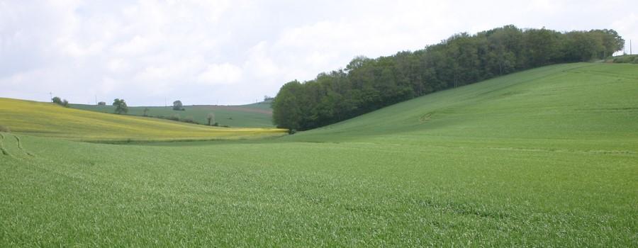 Elections des chambres d 39 agriculture 2019 - Chambre d agriculture 31 ...